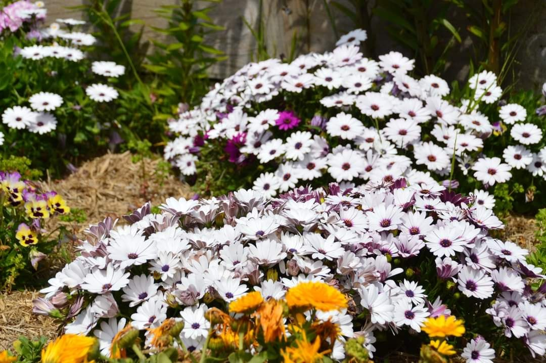 nha hoa hong 2