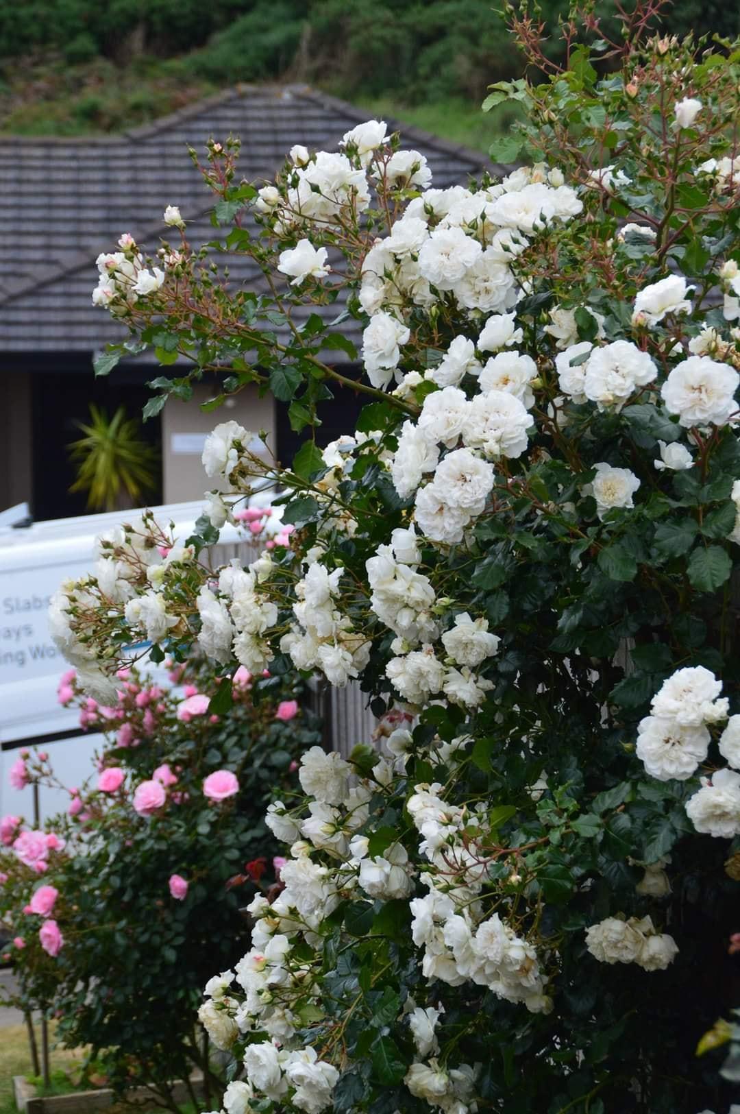 nha hoa hong 7