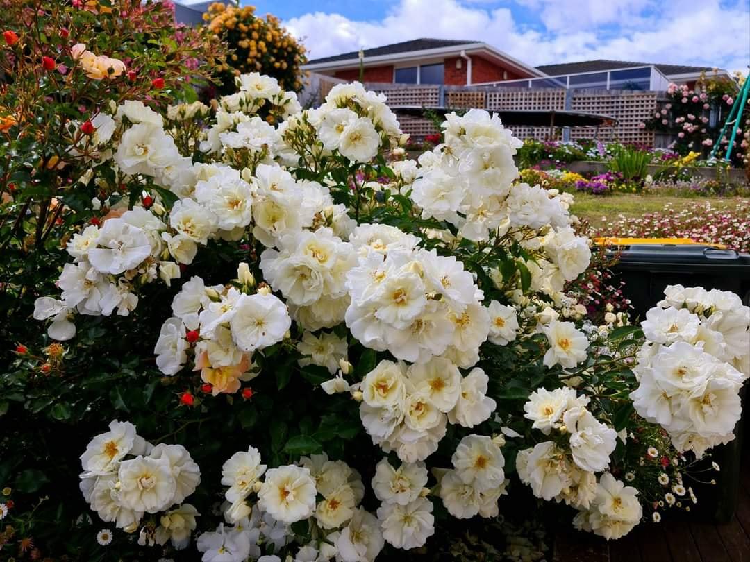nha hoa hong 6