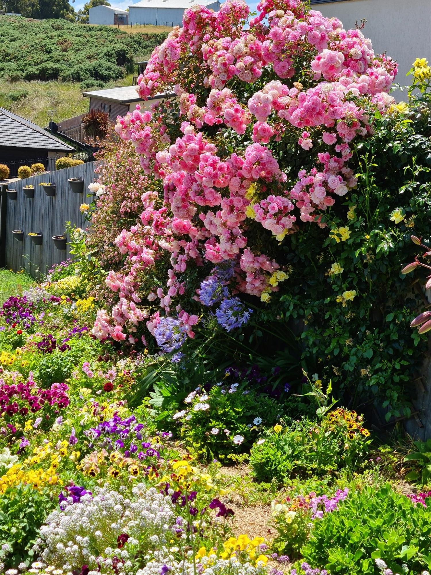 nha hoa hong 5