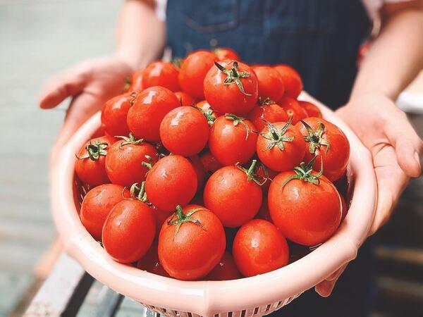 Giải cứu nông sản, thanh niên hiến kế 'bảo quản cà chua ngon quanh năm, không cần tủ đông'