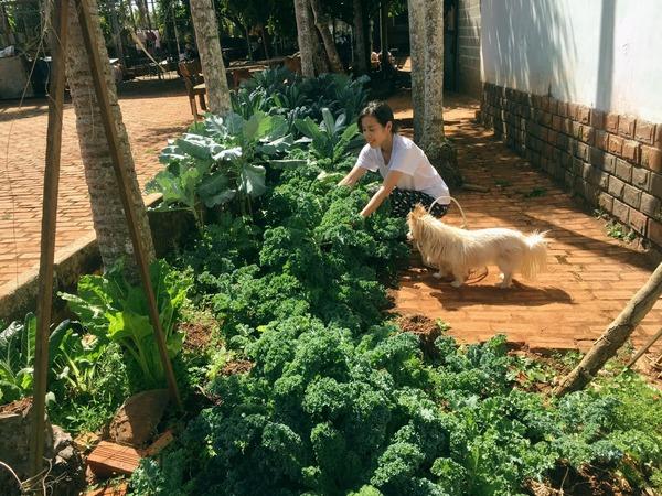 Trồng cải kale chẳng hề khó, mách 'mẹ đảm' học cách làm vườn để có ngay nguồn rau sạch tại gia