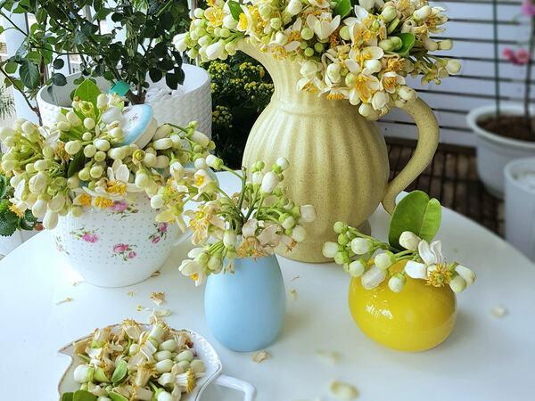 Vào mùa hoa bưởi, học mẹ đảm cách cắm và giữ hoa bưởi tươi lâu từ 3 - 4 ngày khiến hội chị em 'mê mẩn'