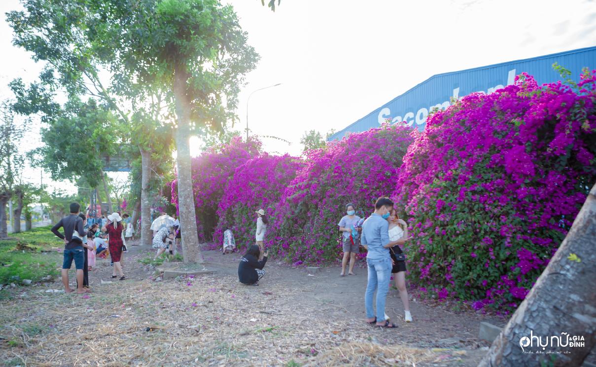 Không cần phải 'bay' tận Hội An, dân Sài Thành đã tìm được điểm check-in hoa giấy cực đẹp chỉ cách 10 km