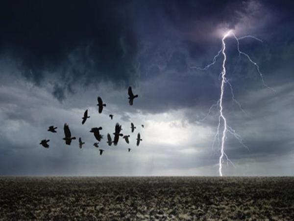 Thức dậy thấy hàng chục con chim chết trong sân, biết được nguyên nhân người đàn ông sợ hãi chạy vào nhà
