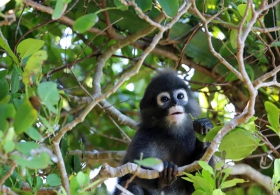 Cứu chú khỉ con, khoảng 2 tháng sau hơn 20 người thoát chết trong gang tấc - Ảnh 1