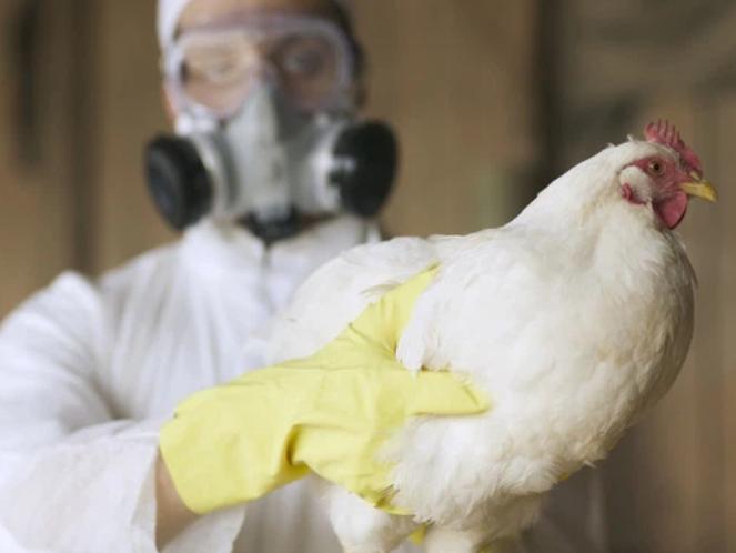 Lần đầu tiên phát hiện cúm gia cầm H5N8 trên người, WHO nhấn mạnh virus 'không có triệu chứng'